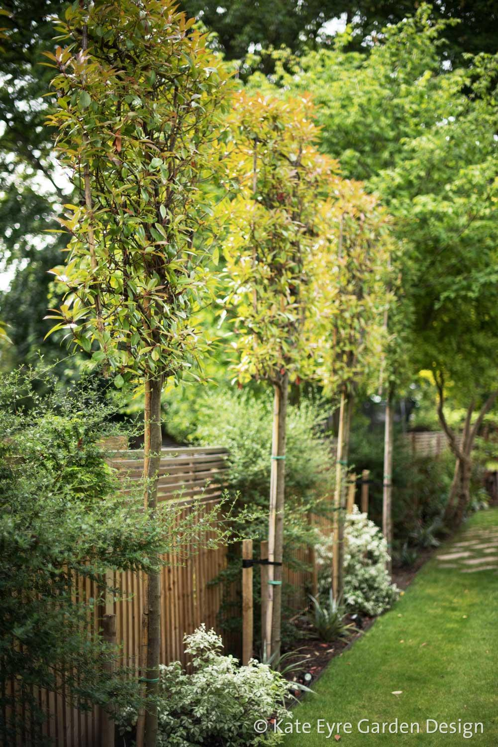 Large back garden design, Calton Avenue, Dulwich, London, 8