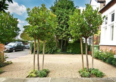 Front garden design, Burbage Road, Dulwich, 5