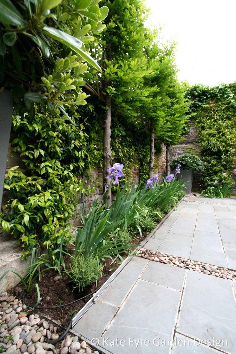 Small back garden design, Kensington, 2