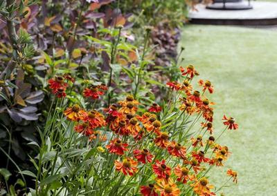 Back Garden 2, Turney Rd, 1