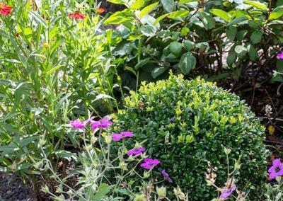 Back Garden 2, Turney Rd, 5