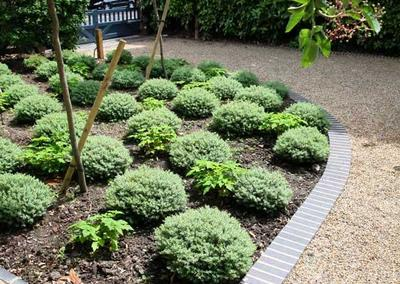 Front garden design in Dulwich Village, 4