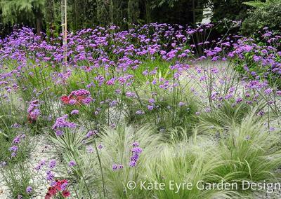 Garden design 2 in Frank Dixon Close,Dulwich, 4