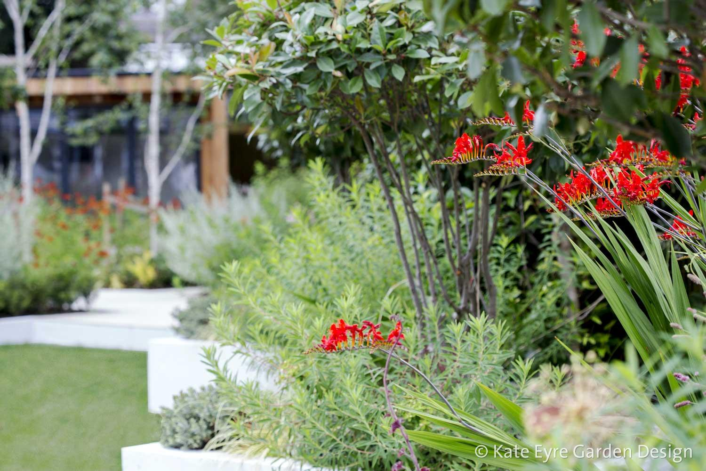Back garden 2, Calton Ave, 6