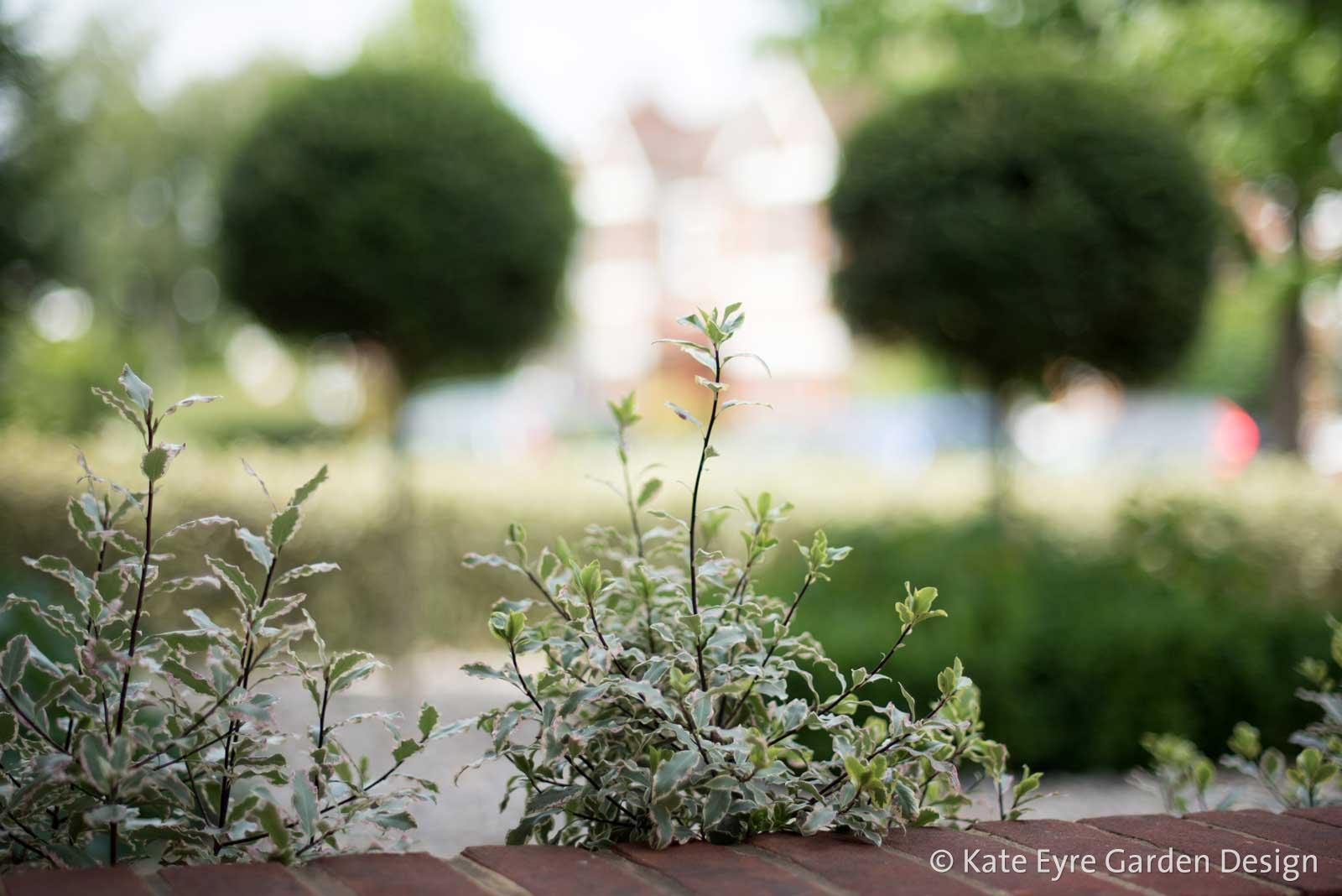 Front garden design, Woodwarde Road, London, 5