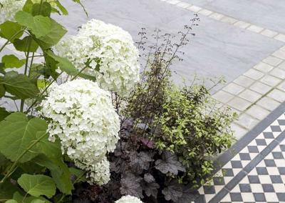 Front garden, Woodwarde Road, London, 6