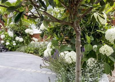 Front garden, Woodwarde Road, London, 8