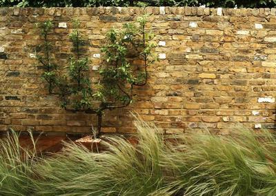 Small back garden design in Chelsea, 3
