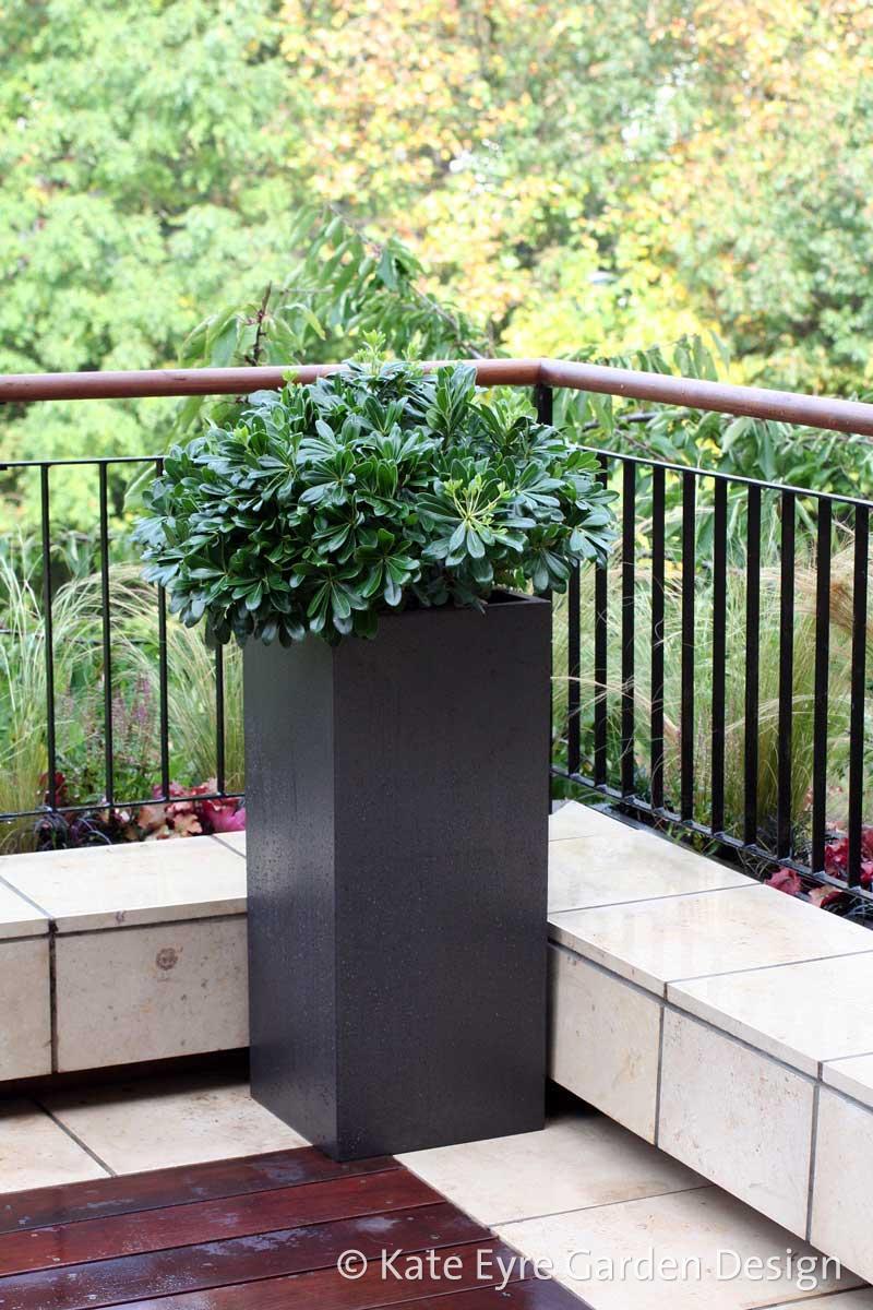 Kate Eyre Garden Design Garden Design At Argyll Road Kensington